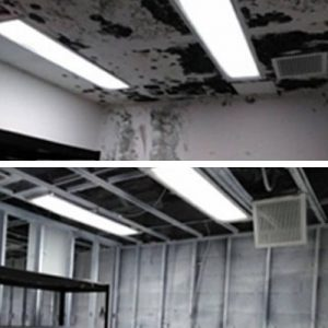 Mold Job before and after
